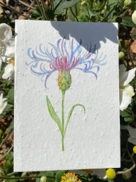 Centaurea Flower Plantable Card