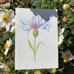 Centaurea Flower Plantable Card