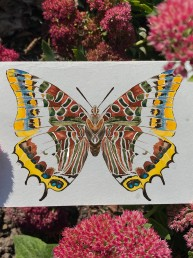 plantableFoxy Emperor Plantable Card card